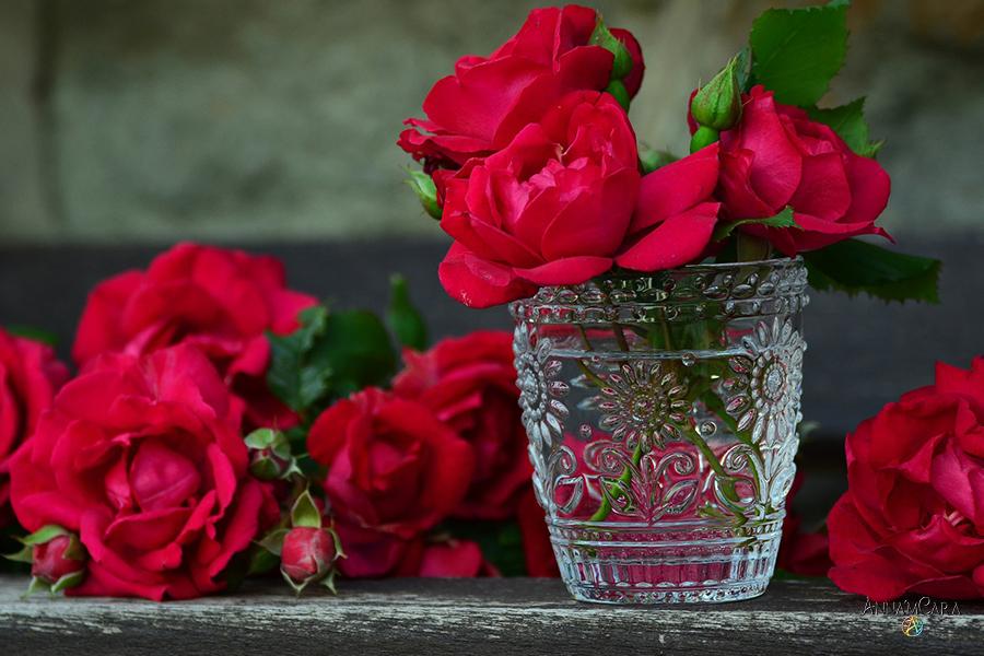 AnnamCara - Blog - Kuriose Tage - Tag der gelben Rosen - Rose in Glycerin