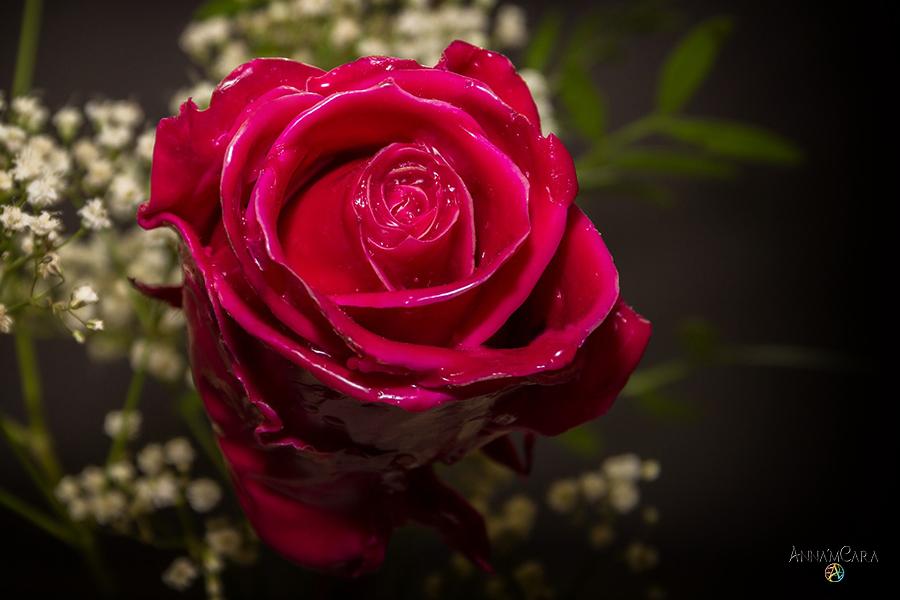 AnnamCara - Blog - Kuriose Tage - Tag der gelben Rosen - Rose in Wachs
