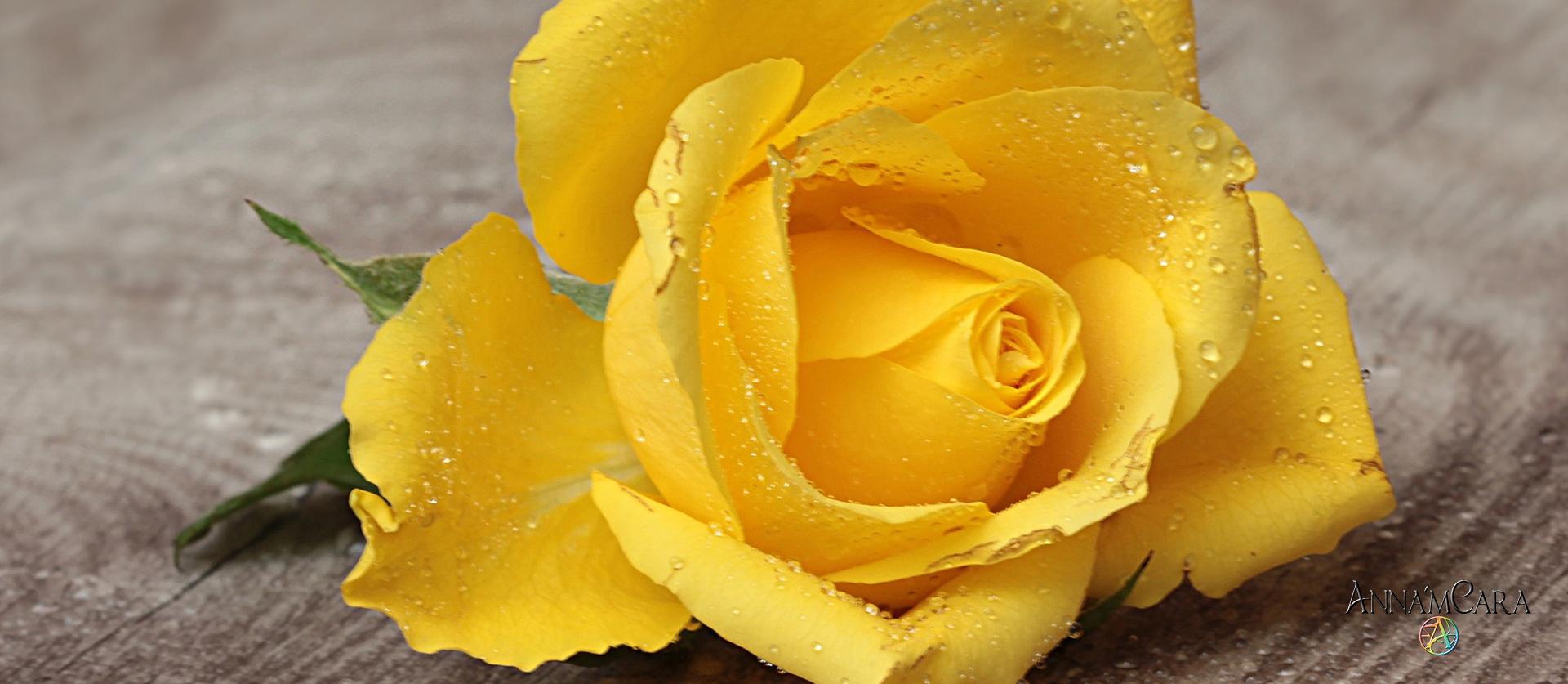 AnnamCara - Blog - Kuriose Tage - Tag der gelben Rosen - Rosen haltbar machen