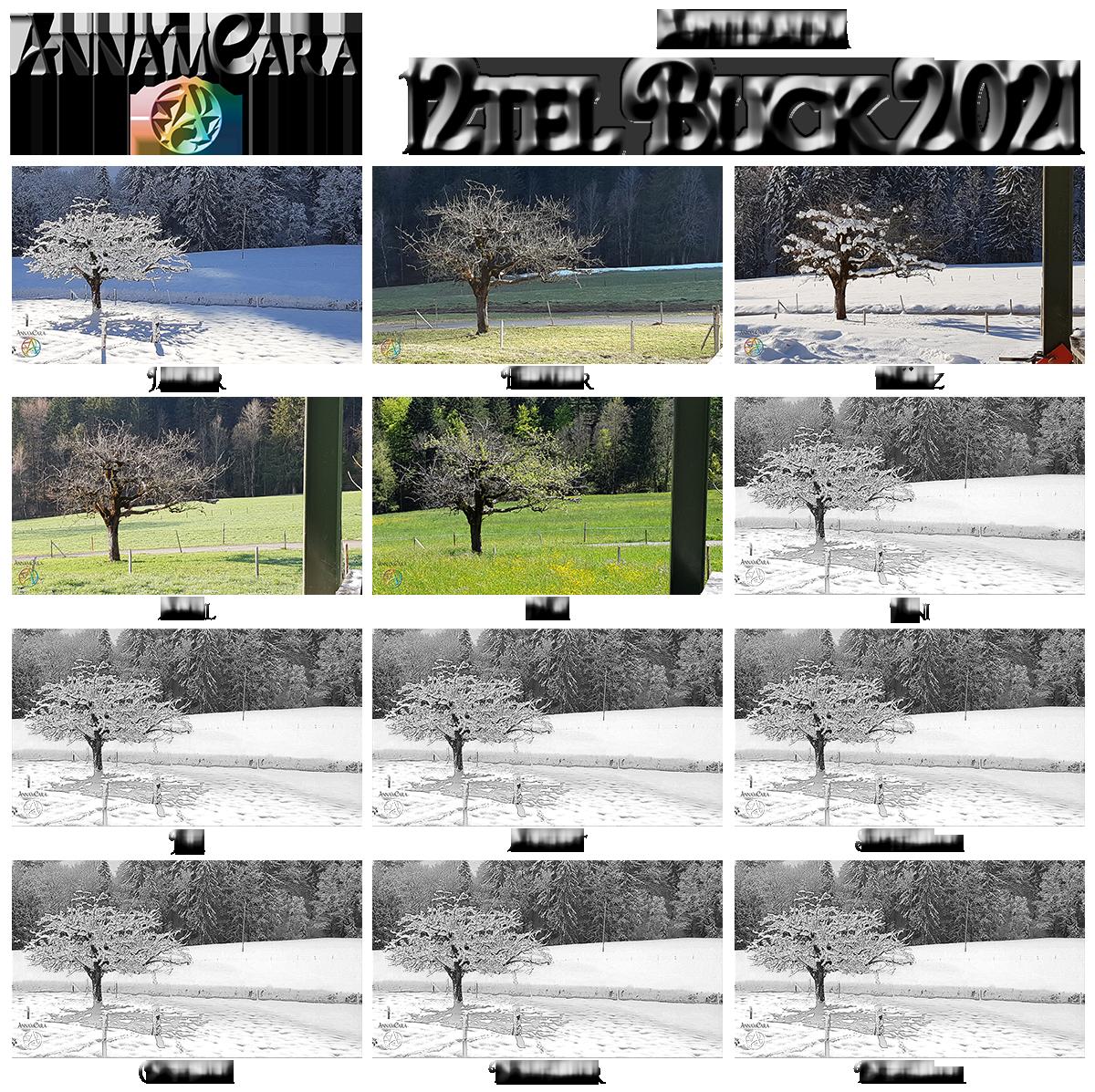 Anna'mCara-Blog - 12tel-Blick - Jahresblick - Mai - Apfelbaum