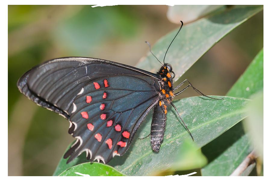 Foto - Angebot - Schmetterling Einzigartigkeit - Anna'm'Cara