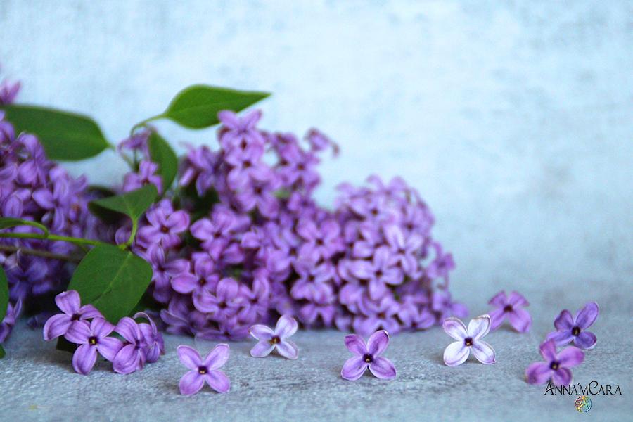 Anna'mCara-Blog - Rezepte - Fliedersirup - Zutaten